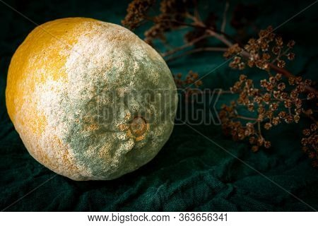 Texture Of Blue Mold On The Lemon Yellow. Spoiled Rotting Lemon With Mold On A Green Rustic Backgrou