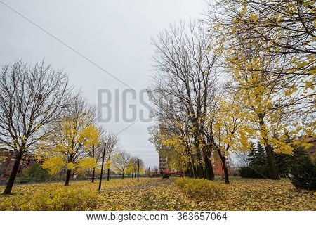 Autumn Tree With Yellow Leaves In Fall In A Park Of Little Burgundy District. Also Called Petite Bou