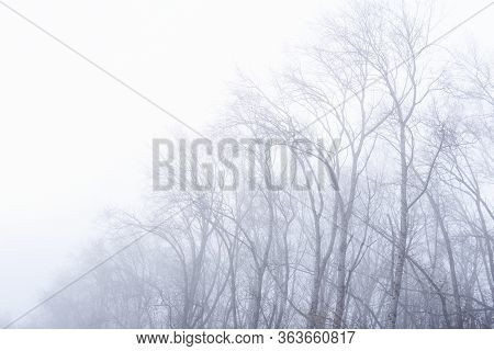 Leafless Crowns Of Winter Trees Are Barely Visible In The Fog