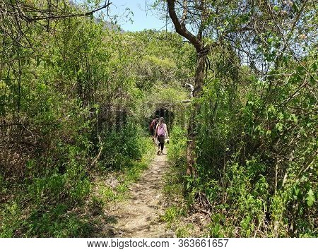 Walking Through The Vegetation On A Trail Near The Town Of Chapala, Jalisco