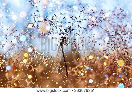 Dragonfly Sits On A Fairy Tale Spring Meadow