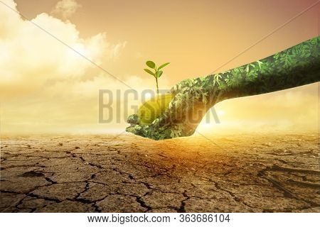 Green Hand Holding Tree Growing On Broken Soil Background. Environment Earth Day Hands From Nature.n