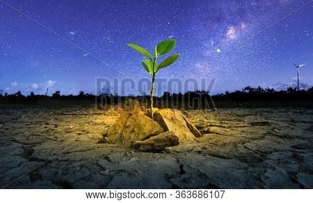 Brown Drought Dry Land Soil Or Cracked Ground Texture And Green Tree With From Agriculture Barren On