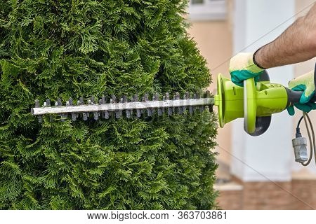 Work In The Garden. The Gardener Is Cutting Plants. Hedge Trimmer Works. Hedge Trimmer In Action. Ho