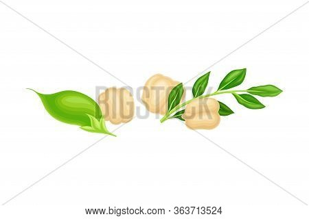 Chickpea Beige Pile With Green Pod As Annual Legume Plant Vector Illustration