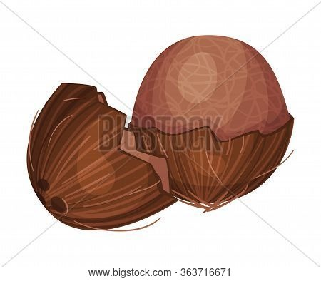 Whole Coconut With Brown Fibrous Husk Vector Illustration