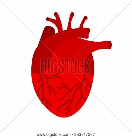 Red Human Heart. The Heart Is The Internal Organ Of Human. Symbol Of Cardiology. The Internal Organ
