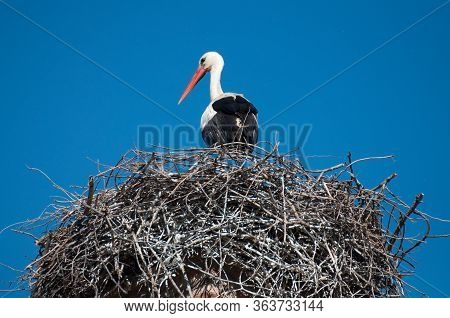Alcalá De Henares, Spain 05-12-2013 A Stork In Its Nest At The Top Of A Battlement.