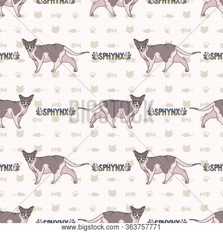 Cute Cartoon Sphynx Cat With Text Seamless Vector Pattern. Pedigree Exotic Kitty Breed Domestic Cat