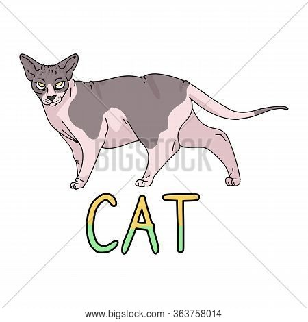Cute Cartoon Sphynx With Text Cat Vector Clipart. Pedigree Exotic Kitty Breed For Cat Lovers. Purebr