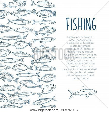 Outline Fish Layout With Bream, Mackerel, Tunny Or Sterlet, Catfish, Codfish And Halibut. Icon Tilap