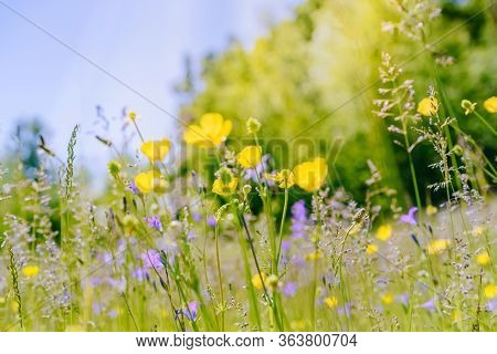 Wildflowers On A Summer Meadow. Unfocused Abstract Floral Background
