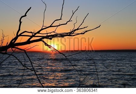 leafless tree brunch on sunset sky background over lake water surgace
