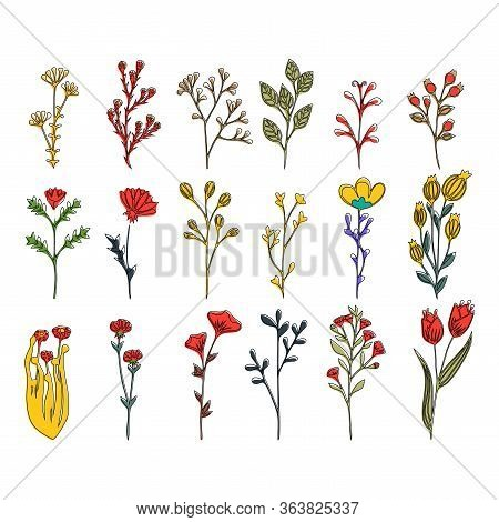 Wild Flower Vector Set Of Floral Elements With Hand Drawn Flowers And Leaves. Flower Graphic Design.