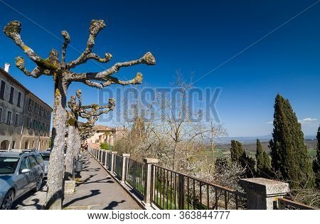 Small Street With Funny Trees. Montepulciano, Italy.