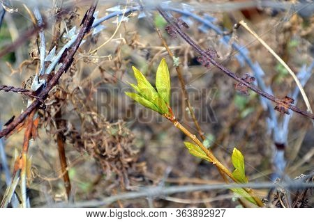 Concept Of Harmful Effects Of Human Activity On The Environment: Tree Branch With Green Fresh Leaves