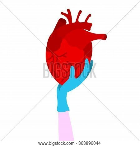 A Hand In A Medical Glove Holds A Red Human Heart. The Heart Is The Internal Organ Of Man. Symbol Of