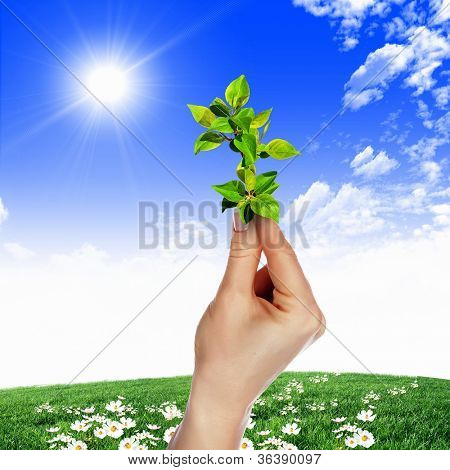 poster of Hands holding green sprouts and sunny sky
