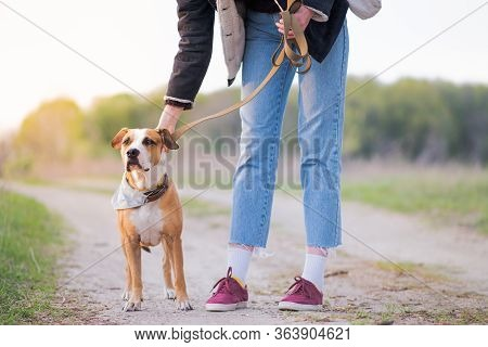 Unleashing The Dog At The Walk Out Of Town. Walking With Pets, Going Outdoors And On Long Trips, Phy