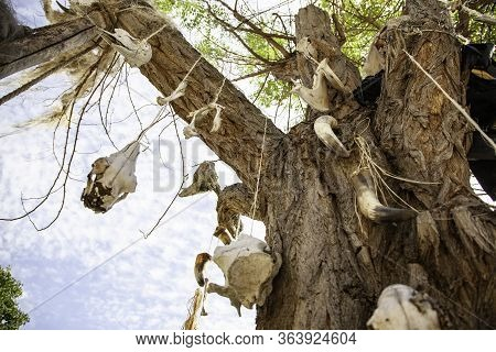 Cow Skulls On Tree