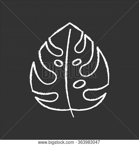 Monstera Leaf Chalk Icon. Evergreen Forest Vines. Swiss Cheese Plant. Indonesian Jungle Palm Leaf. D