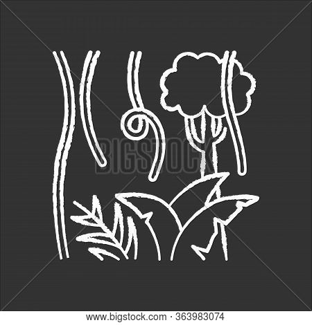 Rainforest Plants And Trees Chalk Icon. Evergreen Forest Vines. Lianas And Fern Frond. Trip To Indon