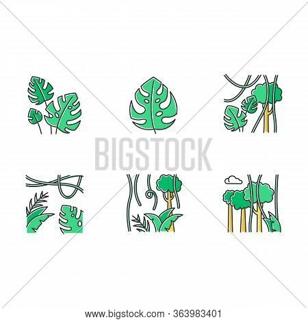 Rainforest Plants Color Icons Set. Evergreen Forest Vines. Swiss Cheese Plant. Trip To Indonesian Ju