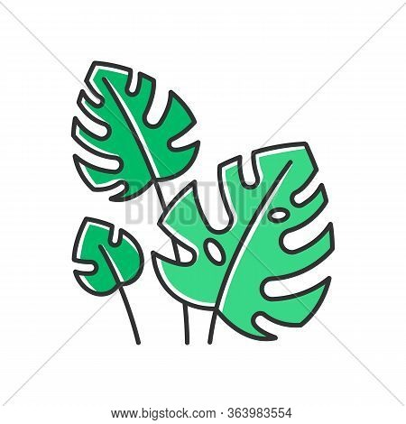 Monstera Leaves Green Color Icon. Evergreen Tropical Forest Vines. Swiss Cheese Plant. Discovering B