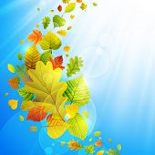 Autumn background with colorful leaves on sky and place for text. Check my portfolio for vector version. poster