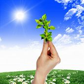 Hands holding green sprouts and sunny sky poster
