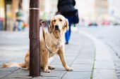 Cute dog waiting patiently for his master on a city street poster