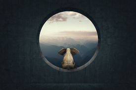 Elephant Sits On A Round Concrete Windor And Looking At Mountains . This Is A 3d Render Illustration