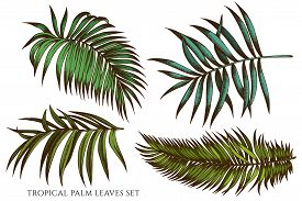 Vector Set Of Hand Drawn Colored Tropical Palm Leaves Stock Illustration