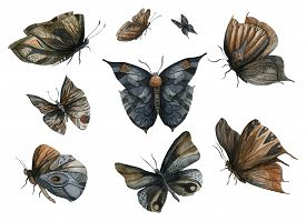 Night Dark Butterflies Set. Abstract Fantasy Design Elements. Isolated On White Background. Watercol