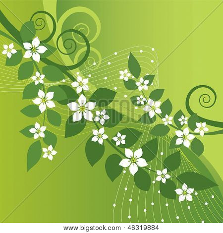 Beautiful jasmine flowers and green swirls on green background. This image is a vector illustration.