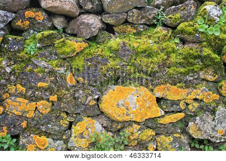 Abstract rough rocky terrain with different types of grasses and plants growing between rocks for background poster