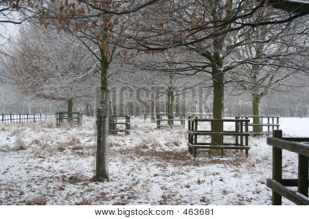 Winter Snow Scene