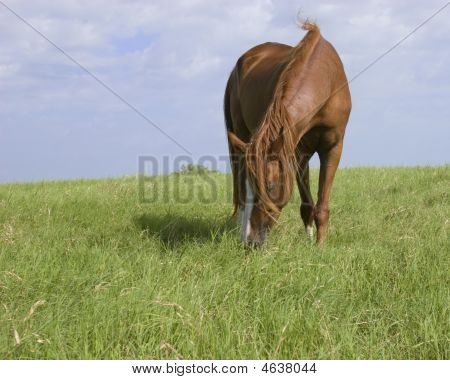Sassy grazing beta