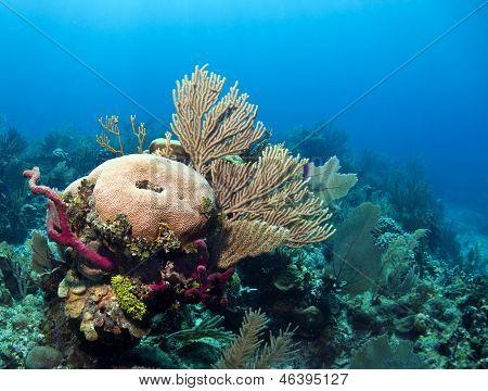 Underwater Coral Reef Roatan