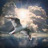 The Seagull flying over a sea against a dramatic sky. Background from nature. poster