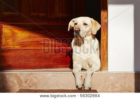 Dog Is Waiting