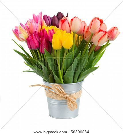 Bunch of tulips flowers  in metal pot