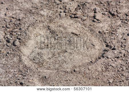 Hoof Print On The Ground
