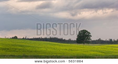 Green Field And Storm Clouds