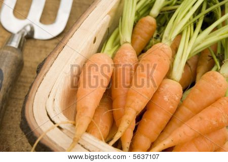 Carrots in a Wooden Trug poster
