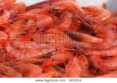 fishermans catch of fresh pink prawns poster