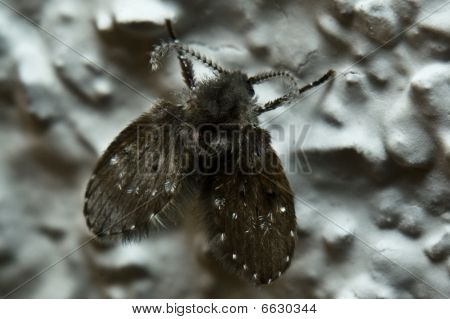 Mini Moth
