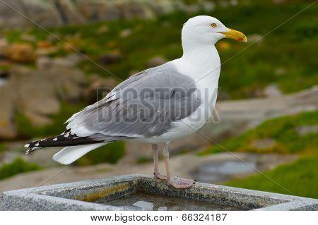 bird in Maine