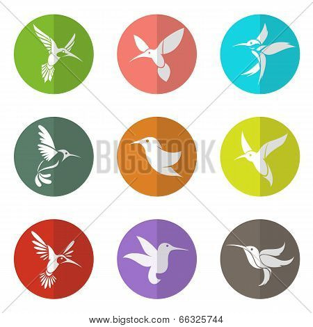 Vector Group Of Hummingbird In The Circle