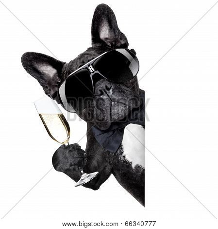 Champagne Dog